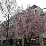 Blühende Bäume am Bahnhof