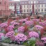 Herbst in Fulda