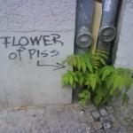 flower-of-piss