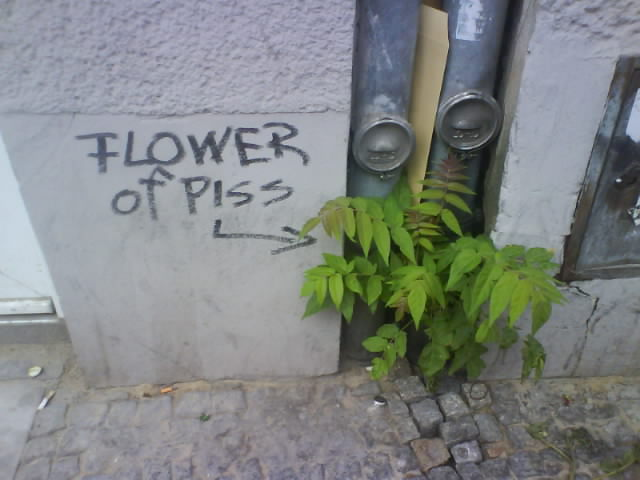 flower-of-piss