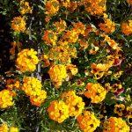 Frühlingspflanzen in Fulda