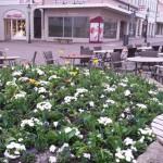 Frühjahrsbepflanzung in Fulda