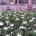 hallo-frueling-früjahrsbepflanzuung-in-fulda-01
