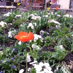 hallo-frueling-früjahrsbepflanzuung-in-fulda-03