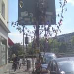 Maibäume Köln